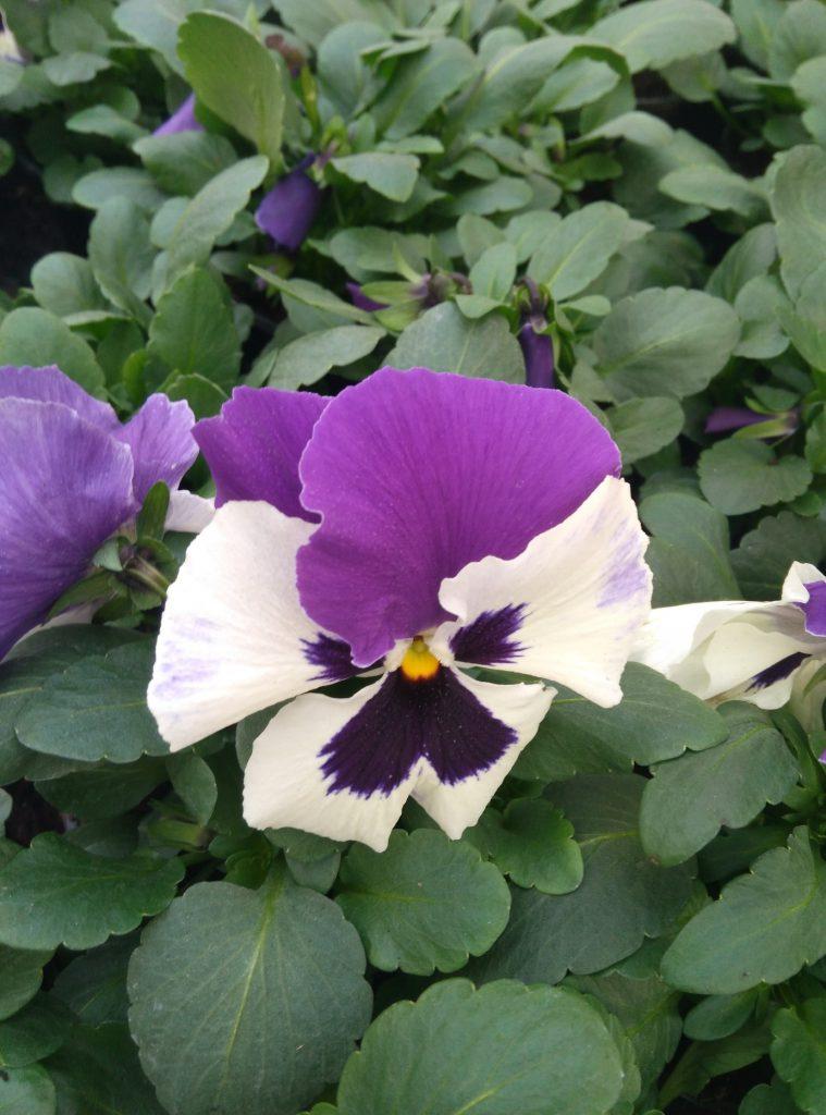 kwiaty balkon