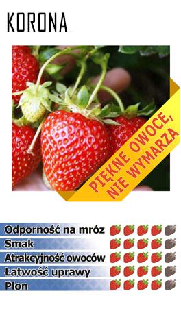 kororna erdbeeren